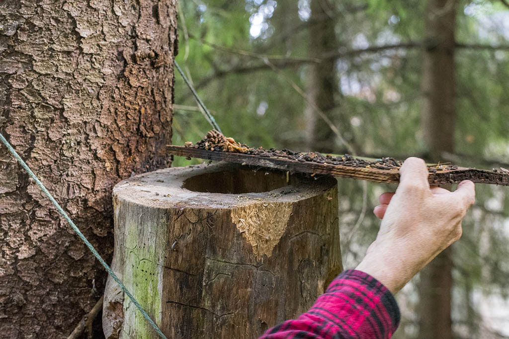 Ispezione di una tana di scoiattoli volanti