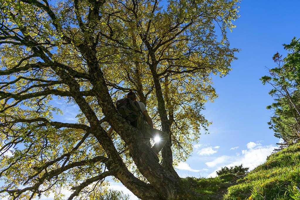 marco seduto in un albero giallo in autunno in norvegia