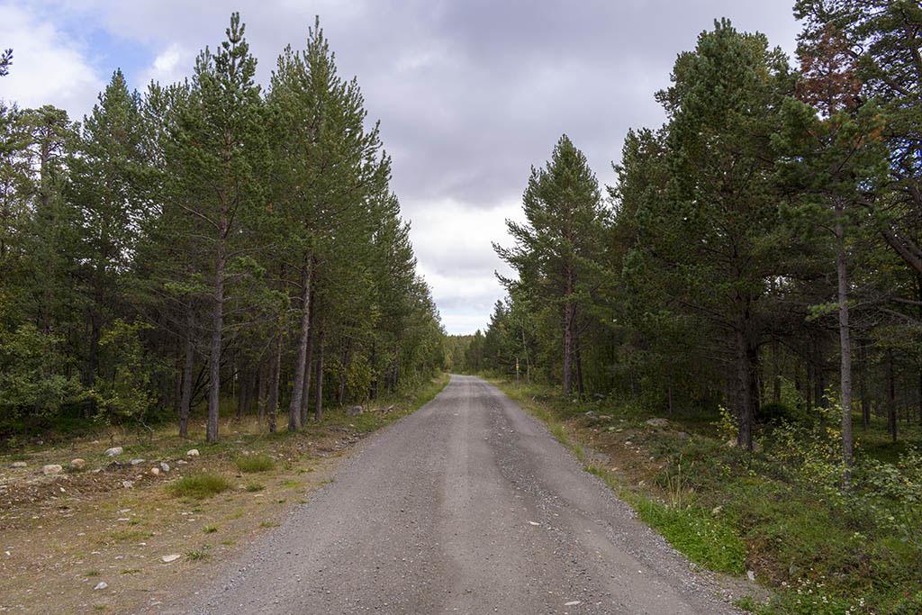 Strada sterrata da Gargia