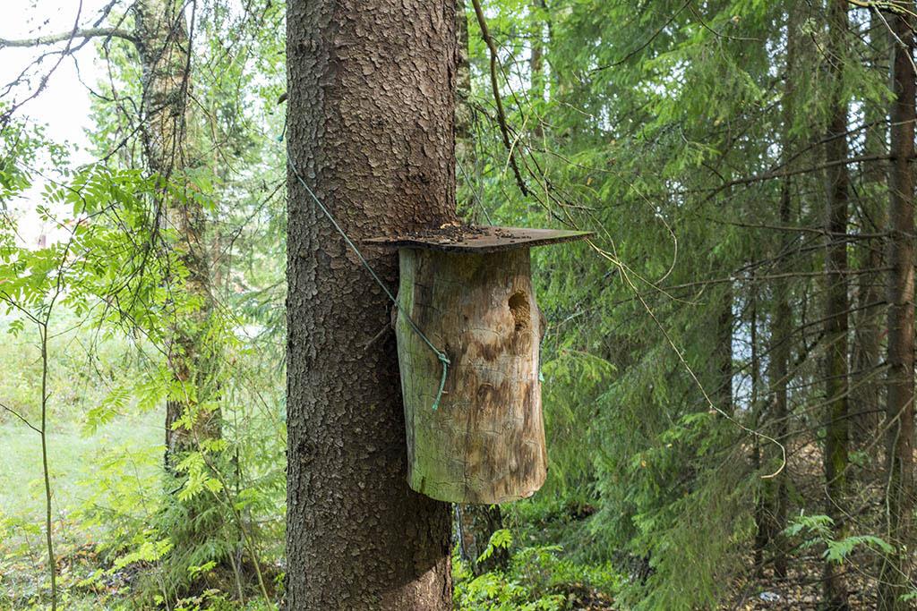 Una tana di scoiattoli volanti