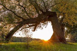 Tramonto in Polonia con albero curvo