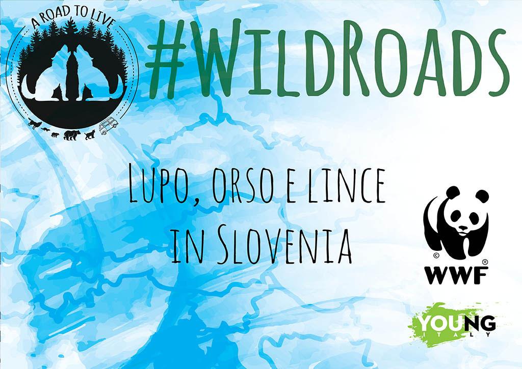 WildRoads: Lupo orso e lince in Slovenia